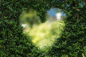 heart-hedge